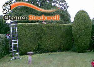Hedge Maintenance Stockwell